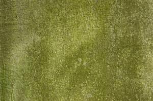 Plant Stem Texture | WallMaya.com