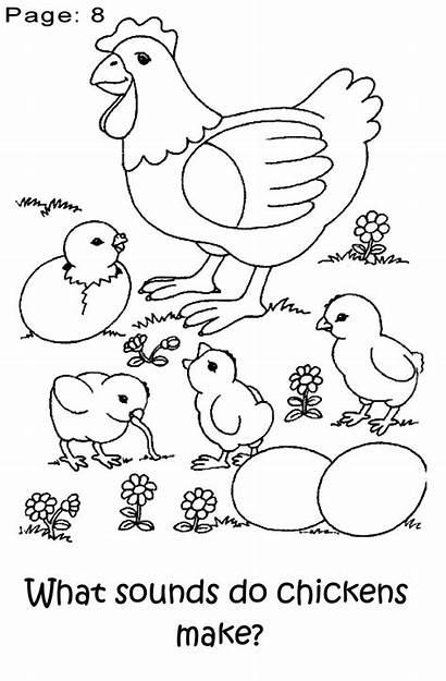 Coloring Chicken Pages Animal Preschool Farm Preschoolers