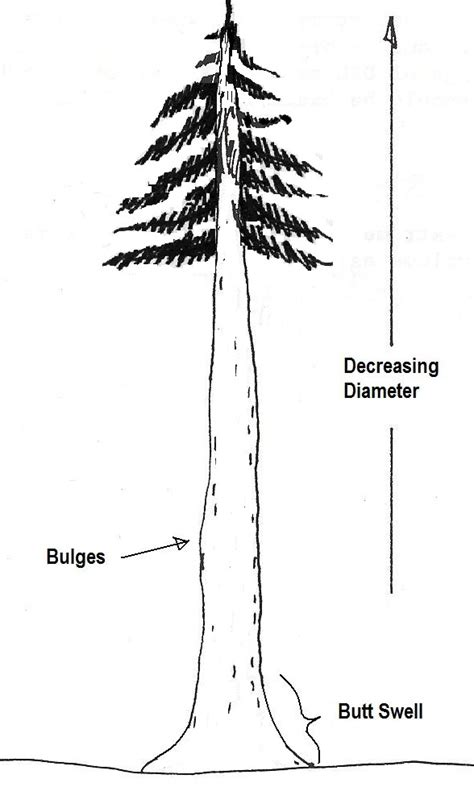 determining tree diameter biology libretexts