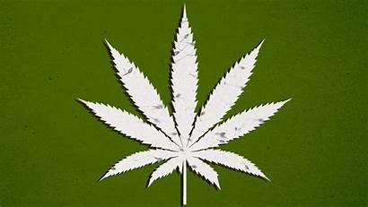 Sperm Pot Smokers Marijuana Anna Study Shows