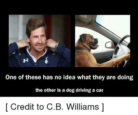 Dog In Car Meme - one of these has no idea what they are doing the other is a dog driving a car credit to cb