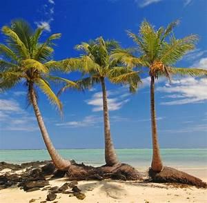 Bilder Von Palmen : exoten das geheimnis der kokosnuss palmen welt ~ Frokenaadalensverden.com Haus und Dekorationen
