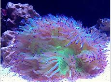 AquaticLog stock by degsy Added Elegance Coral