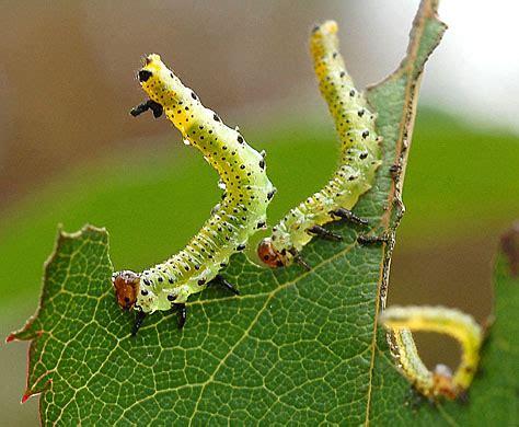 Garden Pests And Diseases  Completegarden's Weblog  Page 4