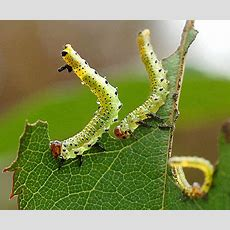 Garden Pests And Diseases  Completegarden's Weblog  Page 4
