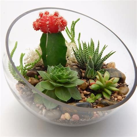 plants arrangements how to create and care for your stunning succulent arrangements