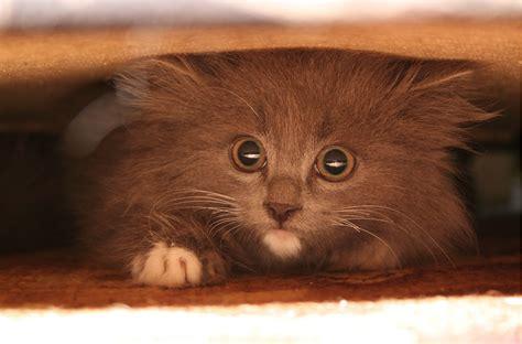 19 fakti, ko nezināji par savu kaķi - Whisker