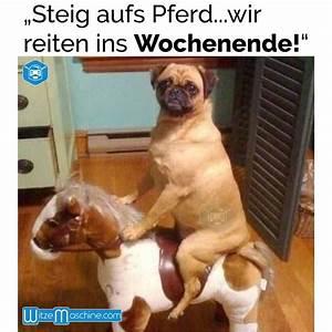 Bilder Schönes Wochenende Lustig : hund reitet pferd ins wochenende reiten witzemaschine ~ Frokenaadalensverden.com Haus und Dekorationen