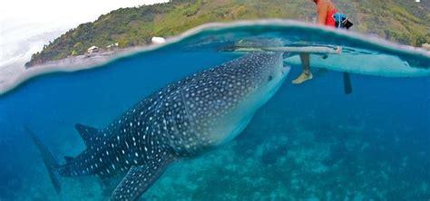 cuisine laurent requins baleine à oslob fragments de planète