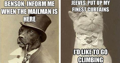 memes pet funny meme hilarious timey pets century turn