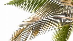 Zimmerpflanzen Pflege Tipps : palmen richtig d ngen und pflegen tipps f r die zimmerpalme ~ Lizthompson.info Haus und Dekorationen