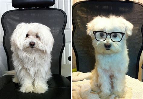 puppers pictures     haircuts