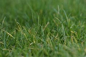 Rasen Wird Braun : braune flecken im rasen so werden sie die braunen stellen los ~ Frokenaadalensverden.com Haus und Dekorationen