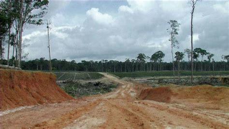 palm oil  climate change culprit climate change vital