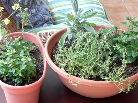 Indoor Herbs Equal Home Remedies During Winter