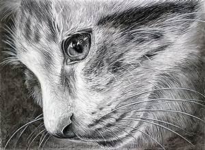 """""""Those Eyes"""" Photorealistic Charcoal Drawing of Domestic ..."""