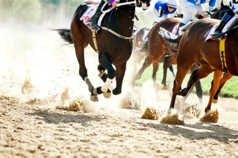 horse race horses racing dakota galloping north legs juli tracks unsung heroes siena track palio open shutterstock cp electronics park