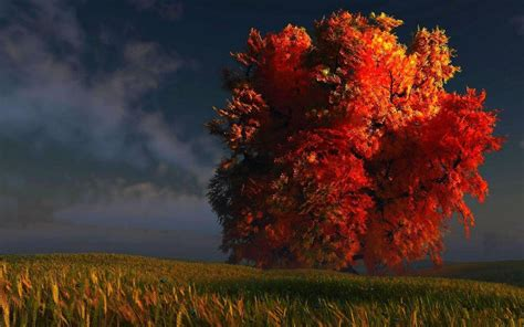 Fall Wallpaper For by Fall Trees Wallpapers Wallpaper Cave
