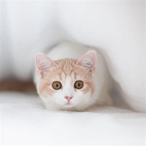 Cute Cat Wallpaper For Ipad Wallpapersafari