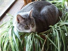 plants that are poisonous to cats 15 amazing animals that start with the letter e