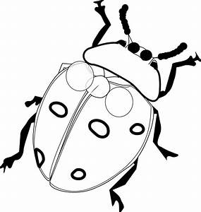 Ladybug Pencil Drawing | Clipart Panda - Free Clipart Images