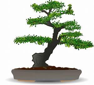 Bonsai Baum Garten : image vectorielle gratuite bonsa arbre arbre nain ~ Lizthompson.info Haus und Dekorationen