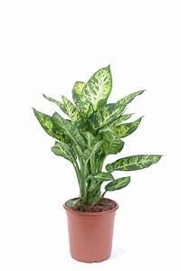 Plante D39intrieur Laquelle Choisir Quand On N39a Pas La