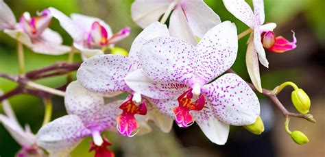 how to take care of an orchid 28 best taking care of orchids indoors how to take care of an orchid indoors good to know