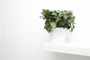 Pflanzen Im Schlafzimmer : bildquelle focuslight ~ Indierocktalk.com Haus und Dekorationen