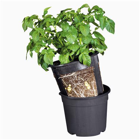 le pot 224 patate jardiner en ville