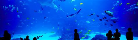 aquarium st malo horaire grand aquarium malo tarif 28 images grand aquarium st malo rue du g 233 n 233 ral patton