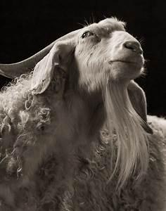 Farm Animals Dramatic Portraits_9 – Fubiz Media