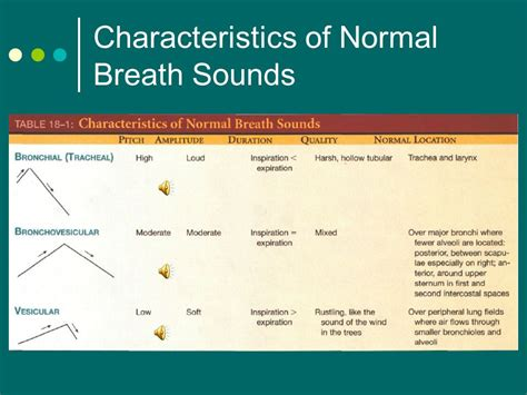 normal breath sounds download