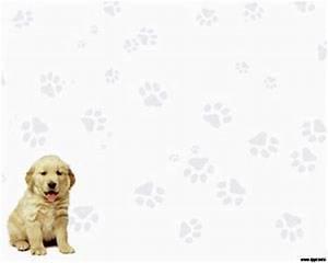 cbd medicine for dogs