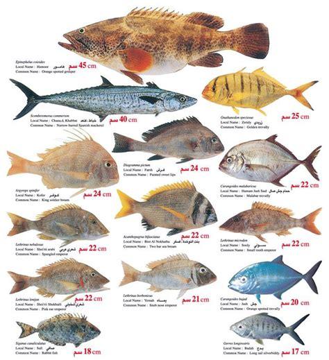 uae aquafarming overfishing tunza eco generation water