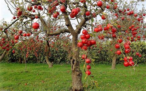 Terreno Acido Per Quali Piante by Piante Da Giardini Piante Da Giardino Piante Per Giardini