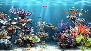 Coral Reef Aquarium Animated Motion Background