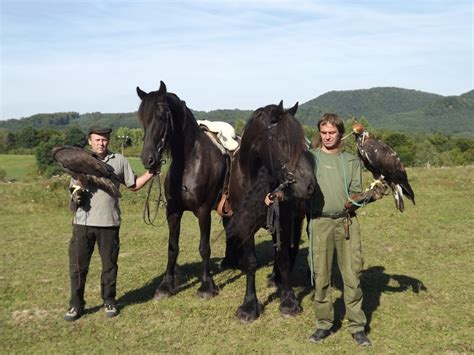 Falconry - Zbynk Lhotk - Breeding - Frisky Horse - Photos