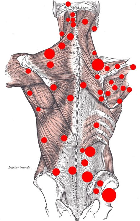 The shoulder muscles produce the characteristic shape of the shoulder and can be classified into two groups: All about Everything: Back Muscle Pain - Back Pain Treatment at Home