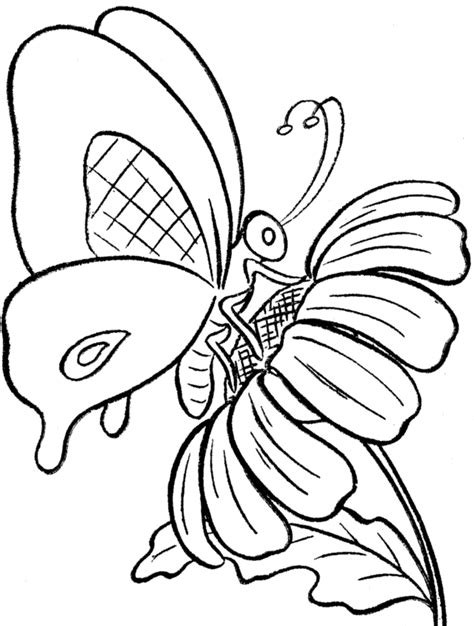 butterfly  flower coloring pages coloring home