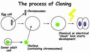 Unit 1  What Is Cloning