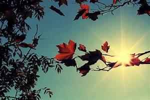 Schöne Herbstbilder Kostenlos : herbst bilder kostenlose und lizenzfreie fotografien ~ A.2002-acura-tl-radio.info Haus und Dekorationen