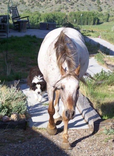 horses humans dog he