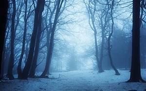 snow winter forest - HD Desktop Wallpapers   4k HD