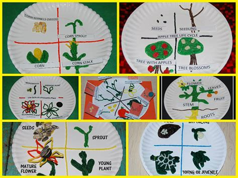 Corn Life Cycle & Sequencing Cards For #preschool