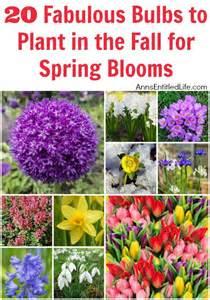 best 25 flowers ideas on flower