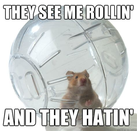 They See Me Rollin They Hatin Meme - 30 most funny hamster meme pictures and photos