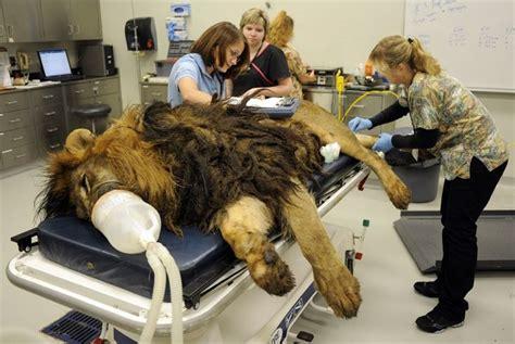 veterinary students nicole bayless left  megan