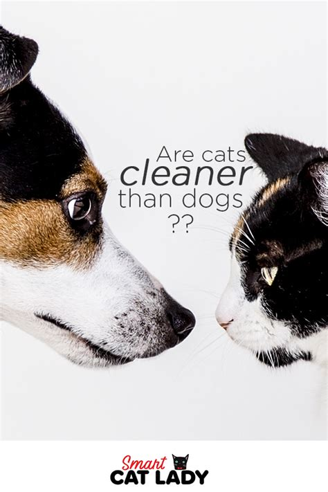 dogs cats than cleaner cat vs dog facts