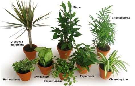 quelle plante opter pour bureau espace zen
